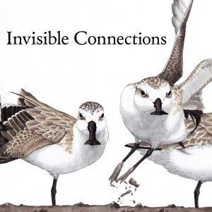 Shorebirds Logo (Large)