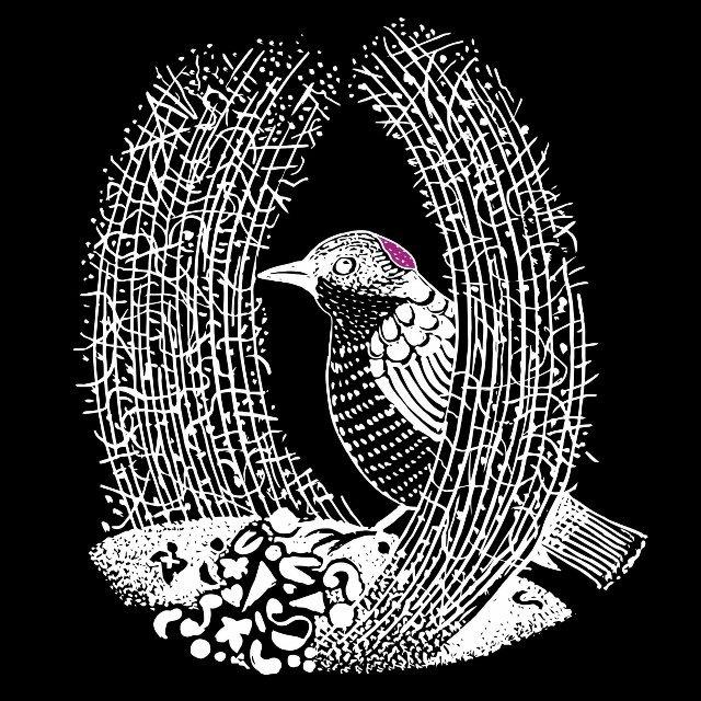 bowerbird-logo-small-web-640x640-1